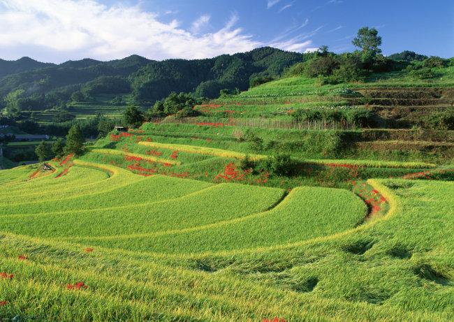 田园风景 清新自然