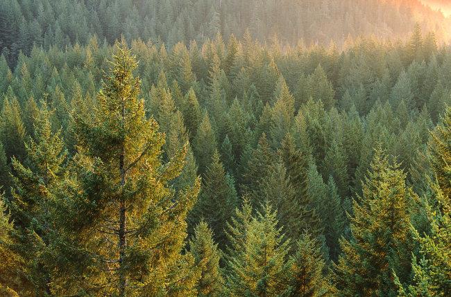 小汤2 穿过森林的谱子