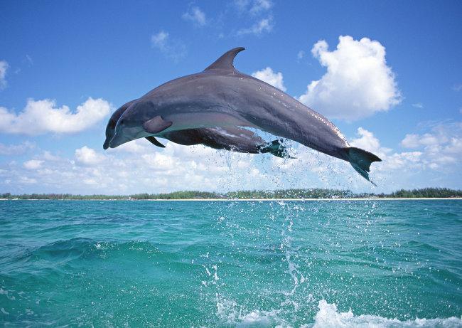 海洋动物 鲸鱼 海洋生物图片素材免费下载-千图网www.