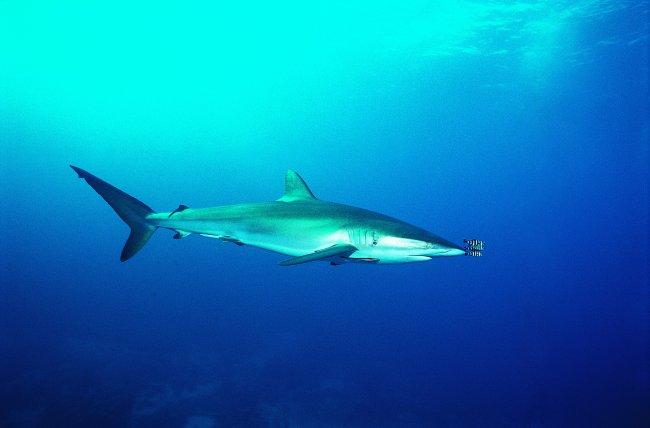 海洋动物 鲸鱼 海洋生物