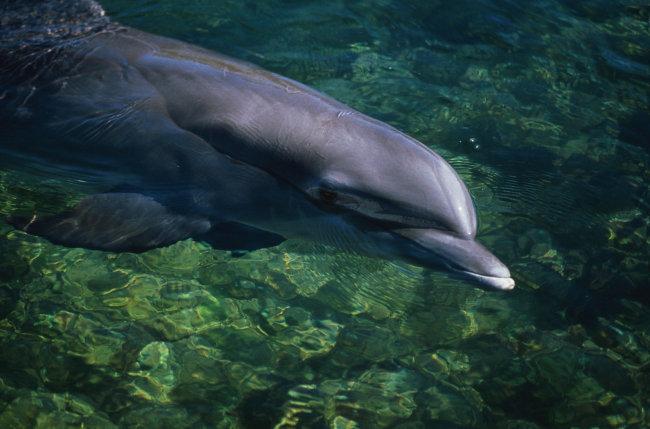 壁纸 动物 海底 海底世界 海洋馆 水族馆 鱼 鱼类 650_429