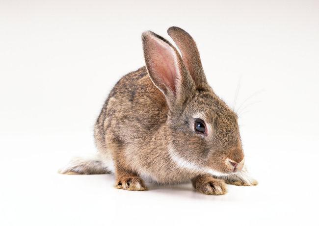 家禽 兔子 动物 图片
