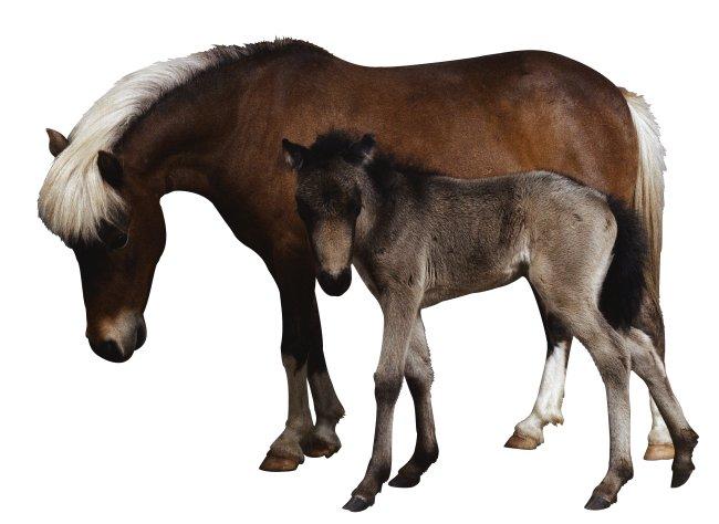 马驴 家畜 动物 图片