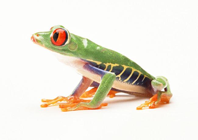 千图网提供精美好看的图片素材免费下载,本次图片作品是关于动植物图片素材,主题是青蛙 爬行动物 动物 图片,编号是949718,格式是jpg,建议使用对应的软件打开,该动植物图片素材大小是455.439 KB,尺寸为2950x2094。 青蛙 爬行动物 动物 图片是由图片设计师傻瓜不傻上传. 浏览本次作品的您可能还对 青蛙 爬行动物 动物 图片