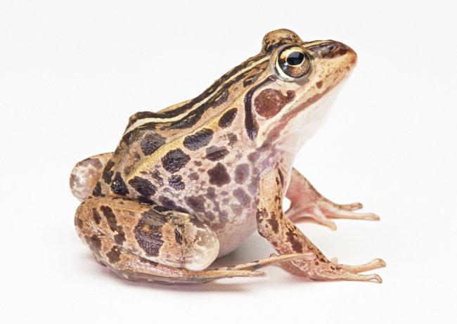 千图网提供精美好看的图片素材免费下载,本次图片作品是关于动植物图片素材,主题是青蛙 爬行动物 动物 图片,编号是949730,格式是jpg,建议使用对应的软件打开件打开,该动植物图片素材大小是666.142 KB,尺寸为2950x2094。 青蛙 爬行动物 动物 图片是由图片设计师傻瓜不傻上传.