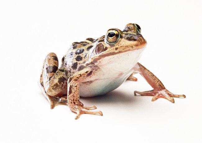 千图网提供精美好看的图片素材免费下载,本次图片作品是关于动植物图片素材,主题是青蛙 爬行动物 动物 图片,编号是949732,格式是jpg,建议使用对应的软件打开,该动植物图片素材大小是483.062 KB,尺寸为2950x2094。 青蛙 爬行动物 动物 图片是由图片设计师傻瓜不傻上传. 浏览本次作品的您可能还对 青蛙 爬行动物 动物 图片