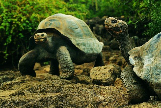千图网提供精美好看的图片素材免费下载,本次图片作品是关于动植物图片素材,主题是乌龟 爬行动物 动物 图片,编号是952479,格式是jpg,建议使用对应的软件打开件打开,该动植物图片素材大小是1.56 MB,尺寸为2260x1510。 乌龟 爬行动物 动物 图片是由图片设计师傻瓜不傻上传.