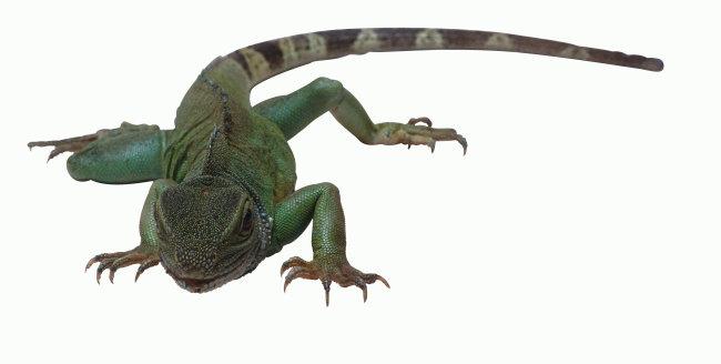 千图网提供精美好看的图片素材免费下载,本次图片作品是关于动植物图片素材,主题是乌龟 爬行动物 动物 图片,编号是952484,格式是jpg,建议使用对应的软件打开,该动植物图片素材大小是1.086 MB,尺寸为4440x2247。 乌龟 爬行动物 动物 图片是由图片设计师傻瓜不傻上传. 浏览本次作品的您可能还对 乌龟 爬行动物 动物 图片