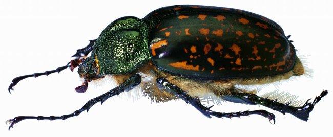 蝉 昆虫 知了 动物 图片