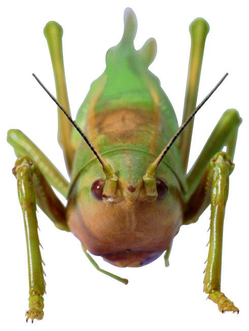 蟑螂 昆虫 知了 动物 图片