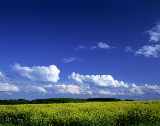 蓝天白云花朵高清图片