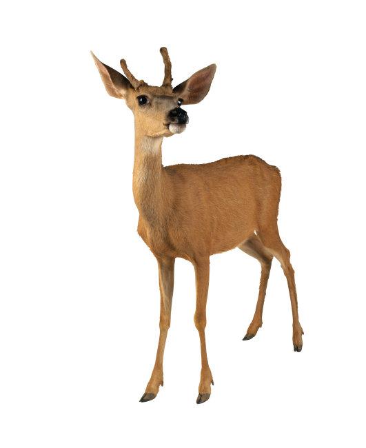 稀有动物 动物 动物图片