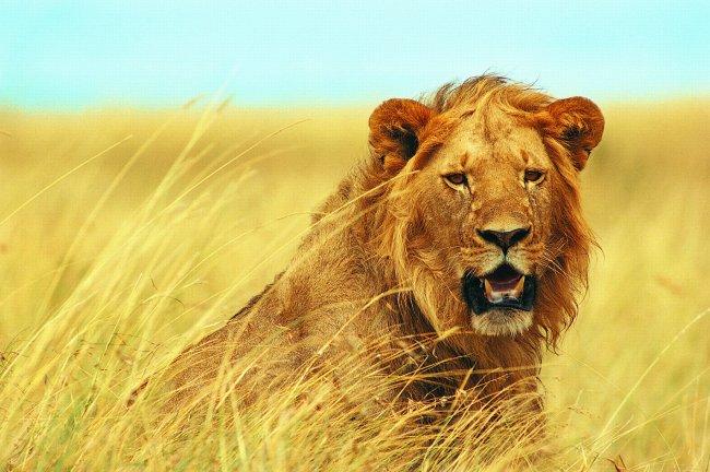 稀有动物 动物 动物剪影 动物图片