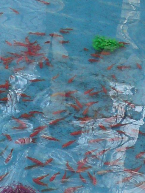 水中仙鹤国画图片