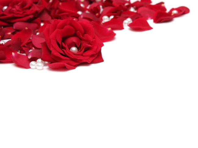 玫瑰花背影图片图片
