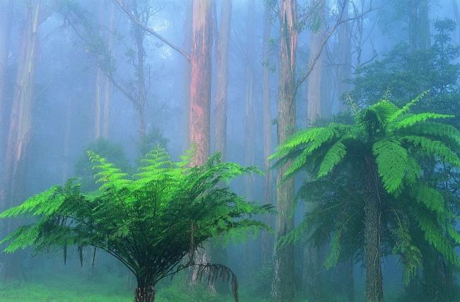 绿色森林 阴暗 雨天 雾 树木
