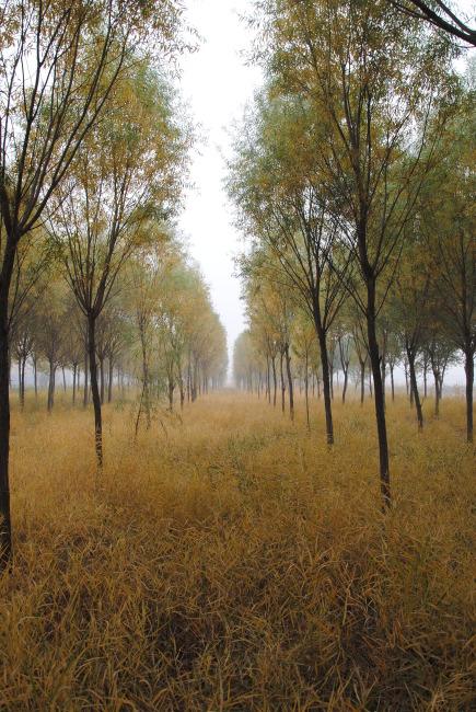 壁纸 风景 森林 桌面 435_650 竖版 竖屏 手机