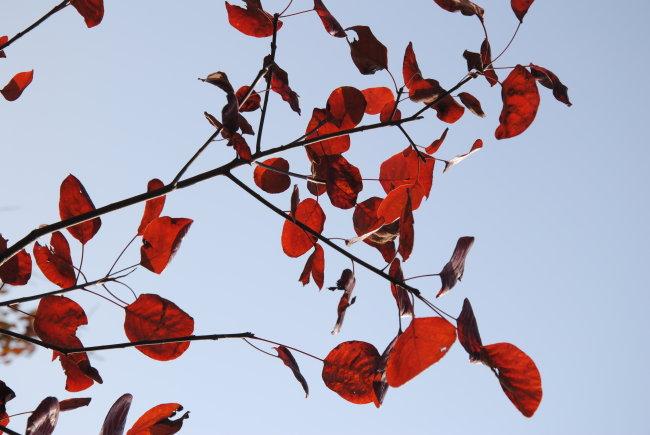 树叶 树枝