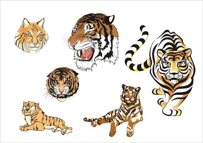 老虎 虎头 动物 凶猛 威武