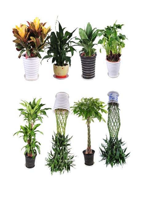 巴西木盆栽 富贵竹 发财树 变叶木 滴水观音