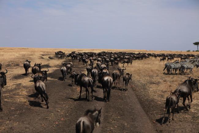 动物群体图片     动物世界