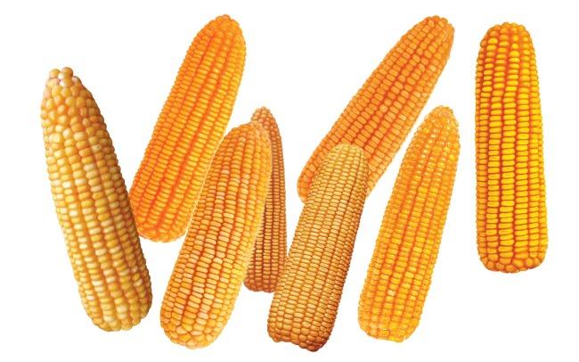 玉米棒子psd素材免费下载-千图网www.58pic.com图片