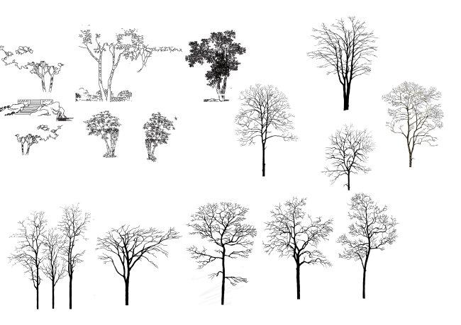 钢笔手绘立面树