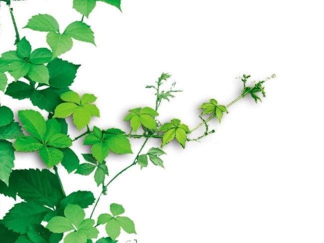 藤蔓植物psd素材免费下载-千图网www.58pic.com图片