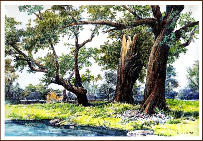樟树林钢笔水彩画图片素材