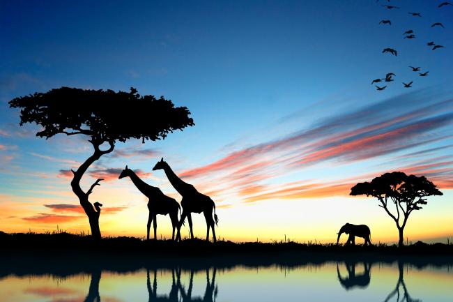 非洲草原动物风景图片