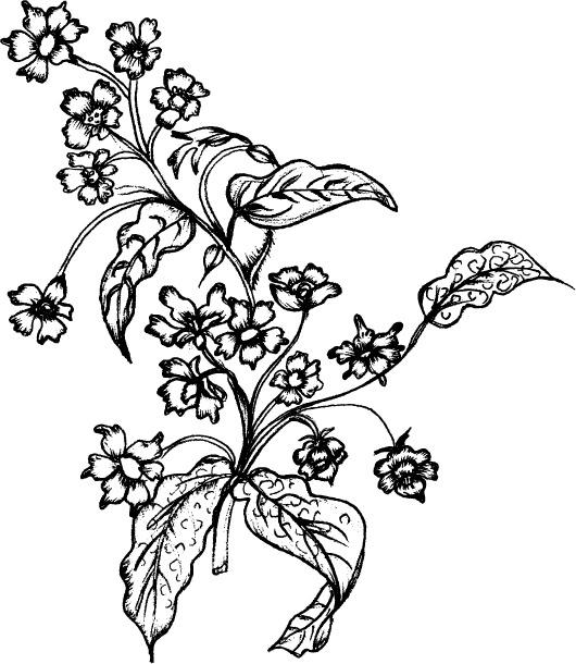 线描植物花卉