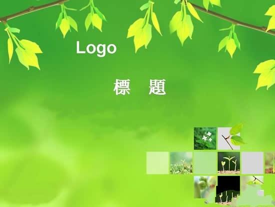 绿叶植物ppt模板