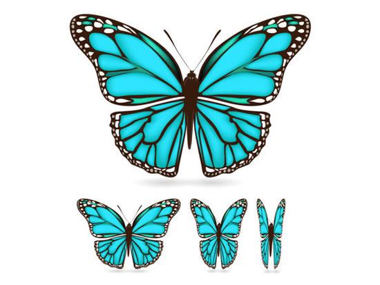 蝴蝶翅膀花纹