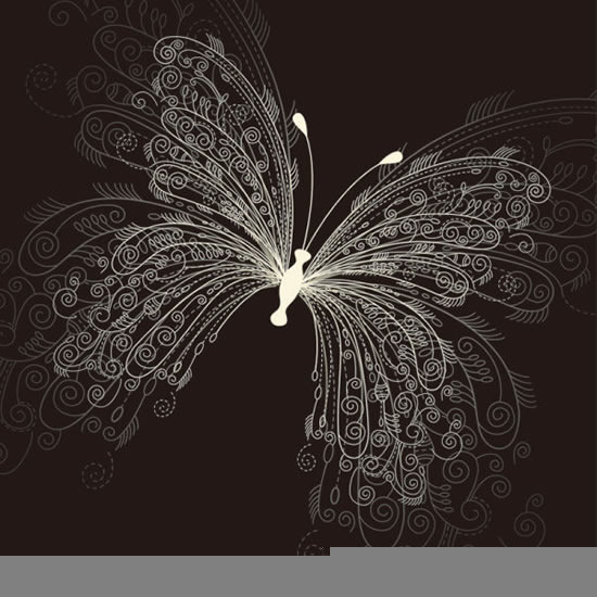 精美蝴蝶手绘