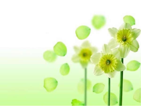 淡雅绿色小花背景ppt模板
