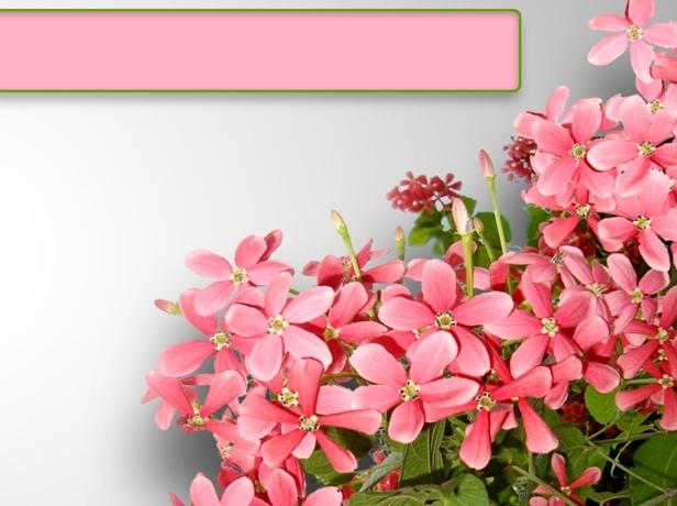 粉色花簇ppt模板下载