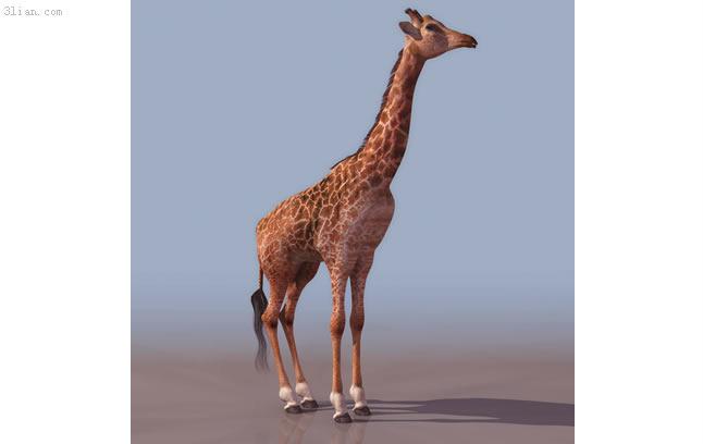 3d长颈鹿模型