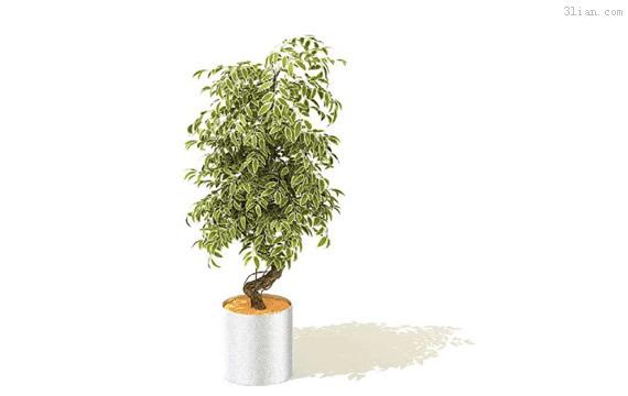 3d家居植物模型
