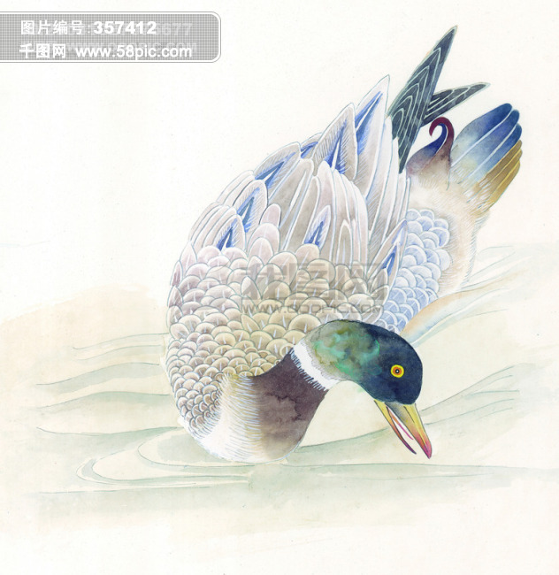 翅膀 孔雀 鸳鸯 飞鸟 丹顶鹤 中华艺术绘画