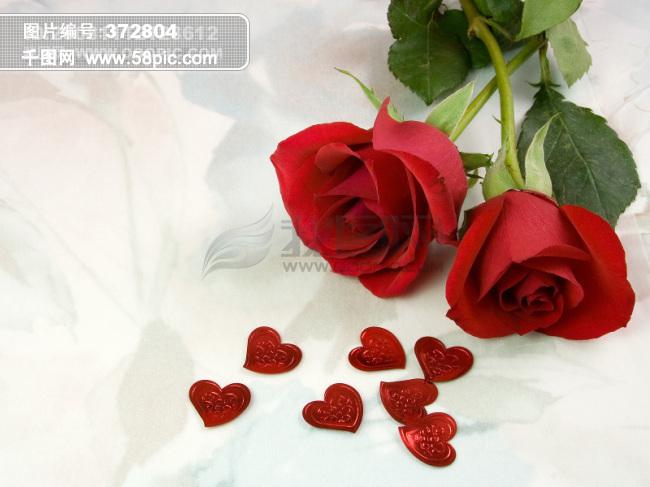 玫瑰花图片素材免费下载-千图网www.58pic.com