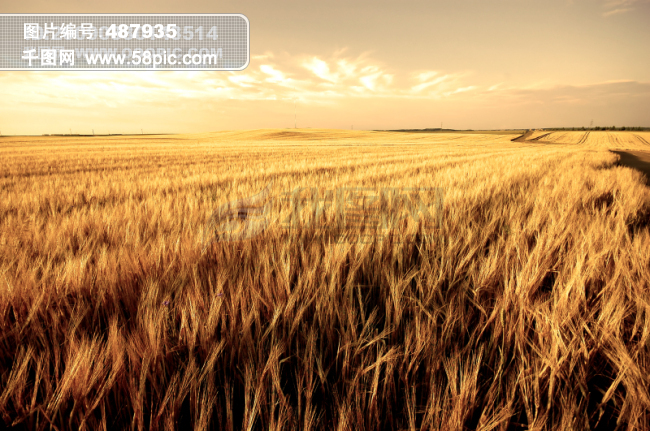 电脑桌面背景大图片图片素材免费下载-千图网www.58