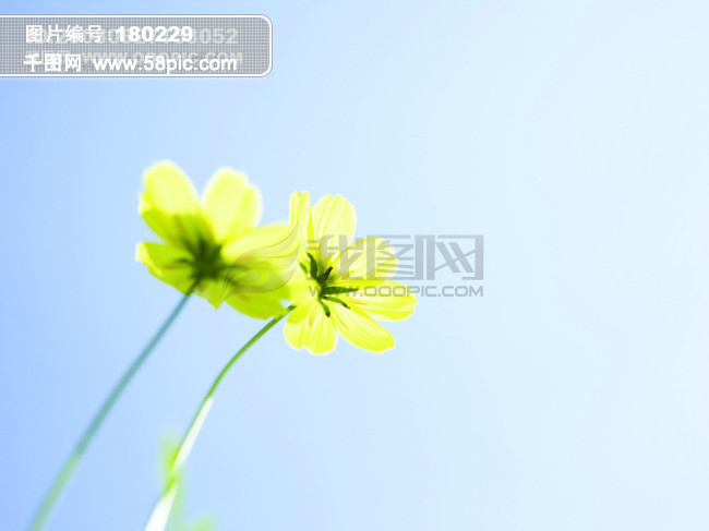 风景花朵免费下载图片