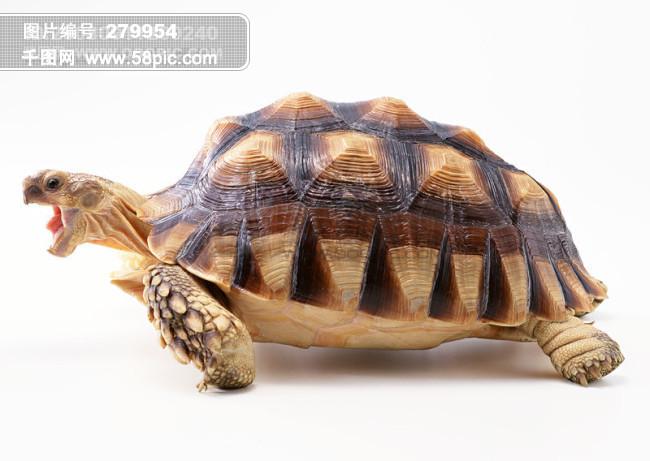 小动物 乌龟 海龟 动物世界 千年乌龟 王八 稀有品种