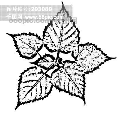 全球首席大百科 水墨 黑白 笔刷 叶子 树叶 叶脉 脉络