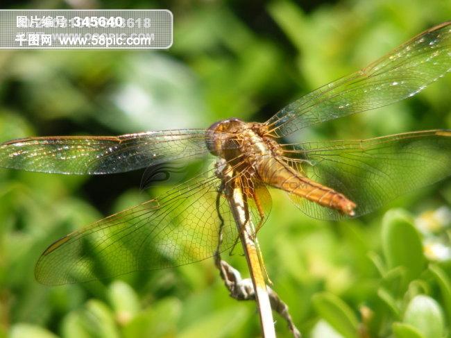 蜻蜓代表什么动物