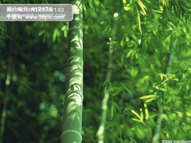 竹子产品手绘图