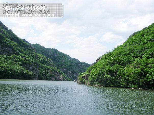 树 绿色 水 植物 风景