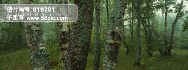 热带雨林树木