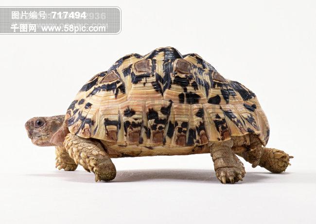 高清动物图片素材免费下载-千图网www.58pic.com
