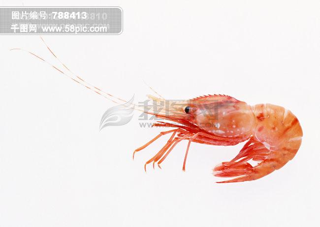 水彩画虾的步骤